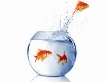 Vissenkommotie